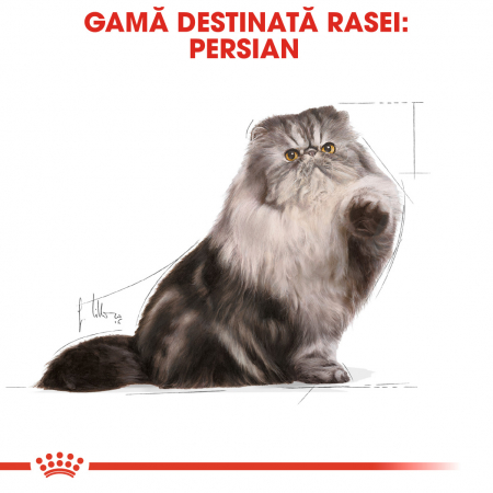 Royal Canin Persian hrana umeda pate pentru pisici 12*85g1