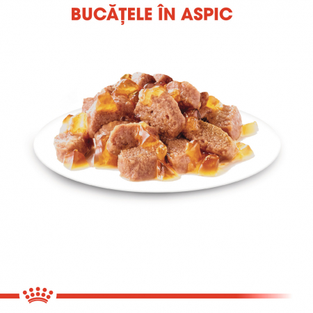 ROYAL CANIN Instinctive hrana umeda in aspic 12x85g6
