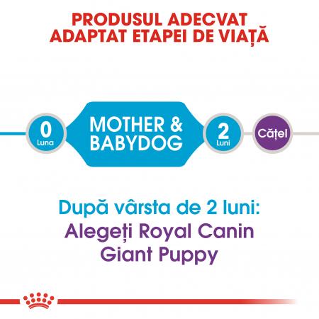 ROYAL CANIN Giant Starter Mother&Babydog 15 kg3