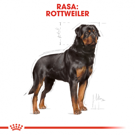 ROYAL CANIN Rottweiler Adult 3 kg2