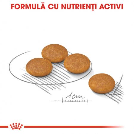 ROYAL CANIN Dermacomfort Mini 3 kg4