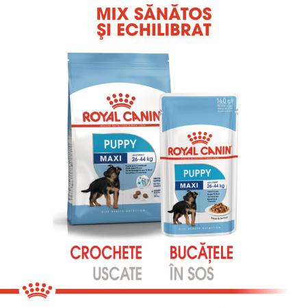 ROYAL CANIN Maxi Puppy hrana umeda 140 g4