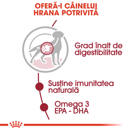 ROYAL CANIN Medium Adult hrana umeda 140g2