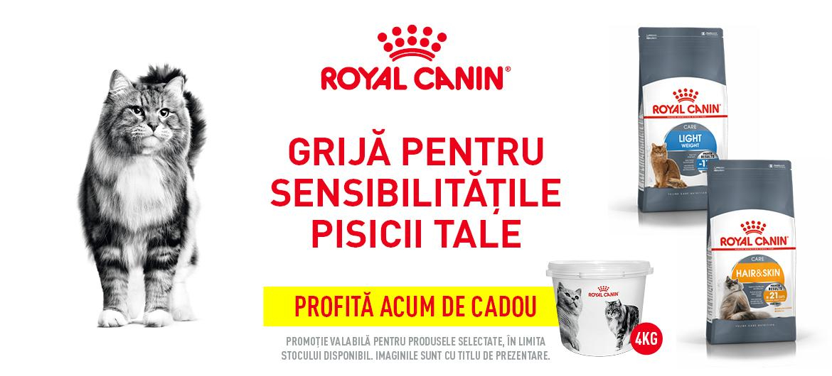 Royal promo pisi