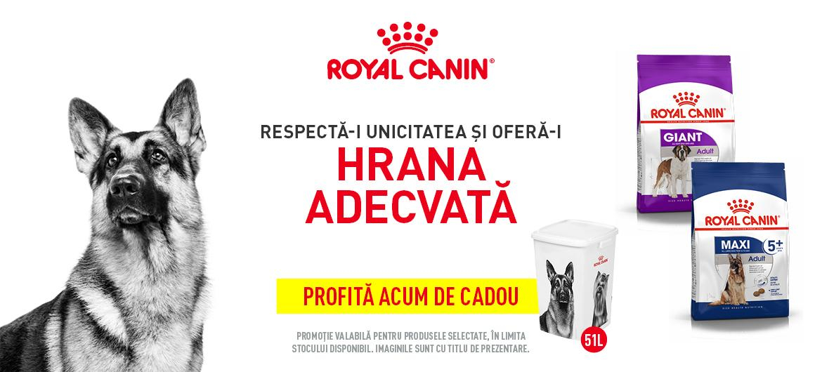 Royal promo câine