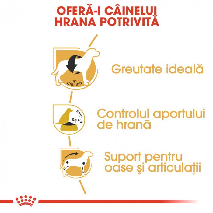 Royal Canin BEAGLE Adult Hrana Uscata Caine 2