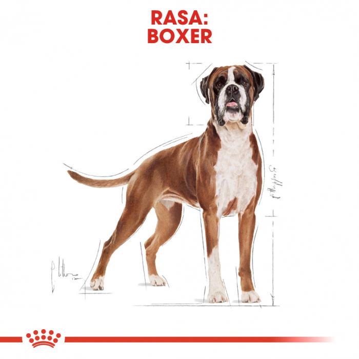 Royal Canin BOXER Adult Hrana Uscata Caine 1