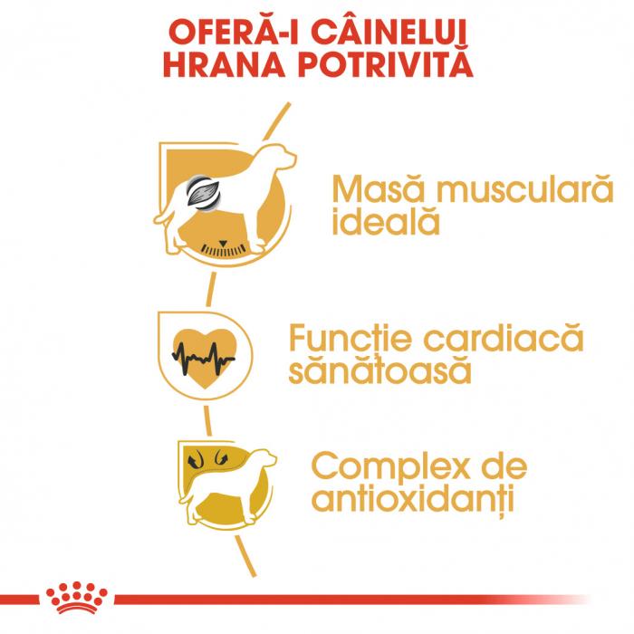 Royal Canin BOXER Adult Hrana Uscata Caine 2