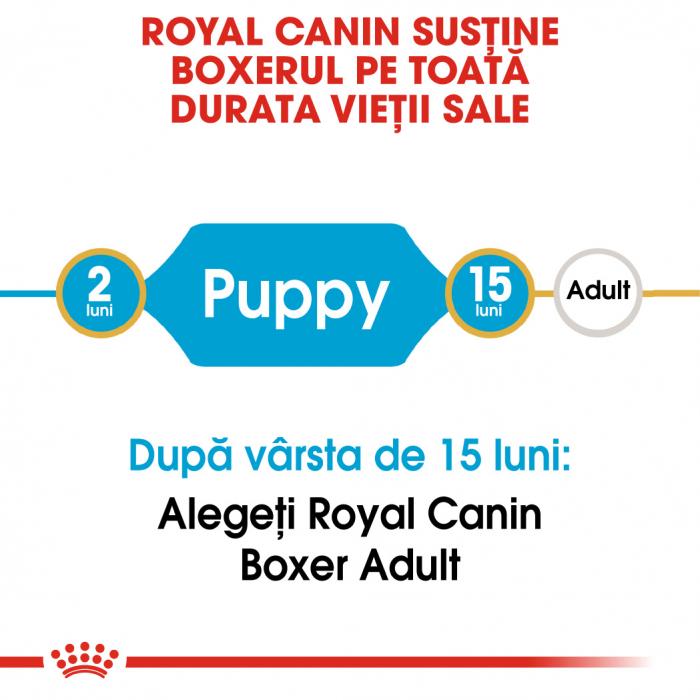 Royal Canin BOXER Puppy Hrana Uscata Caine 1