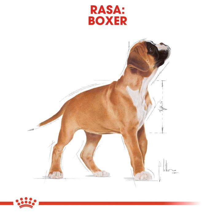Royal Canin BOXER Puppy Hrana Uscata Caine 4