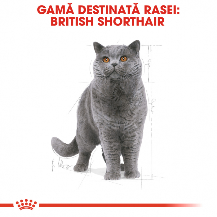 Royal Canin BRITISH SHORTHAIR Adult Hrana Uscata Pisica 1