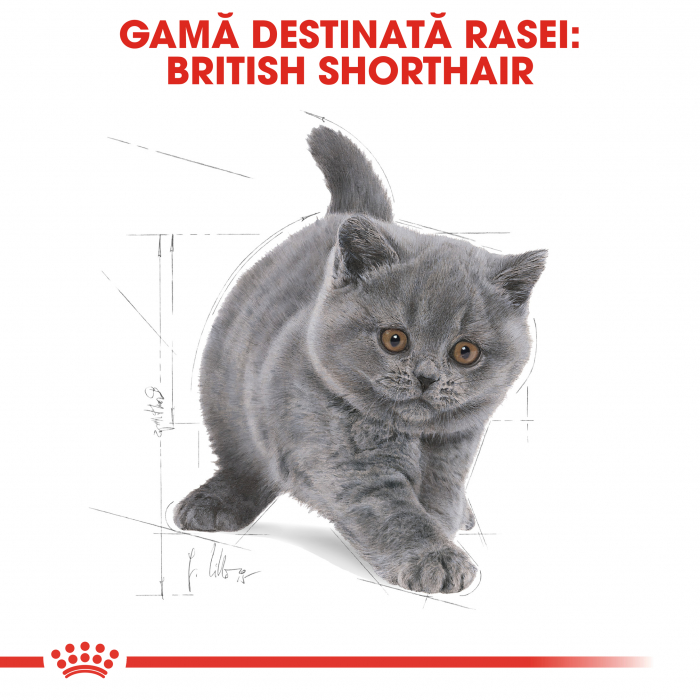 Royal Canin BRITISH SHORTHAIR Kitten Hrana Uscata Pisica 4