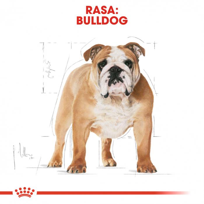 Royal Canin Bulldog Adult hrana uscata caine 1