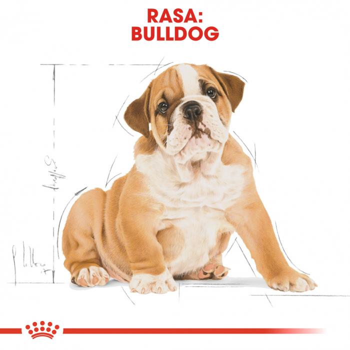 Royal Canin BULLDOG Puppy Hrana Uscata Caine 4
