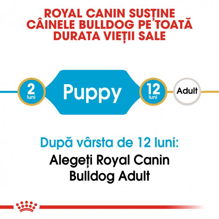 Royal Canin BULLDOG Puppy Hrana Uscata Caine 1