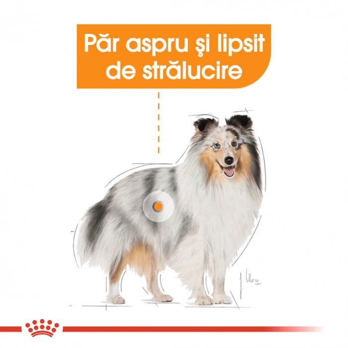Royal Canin COAT LOAF Hrana Umeda Caine 1