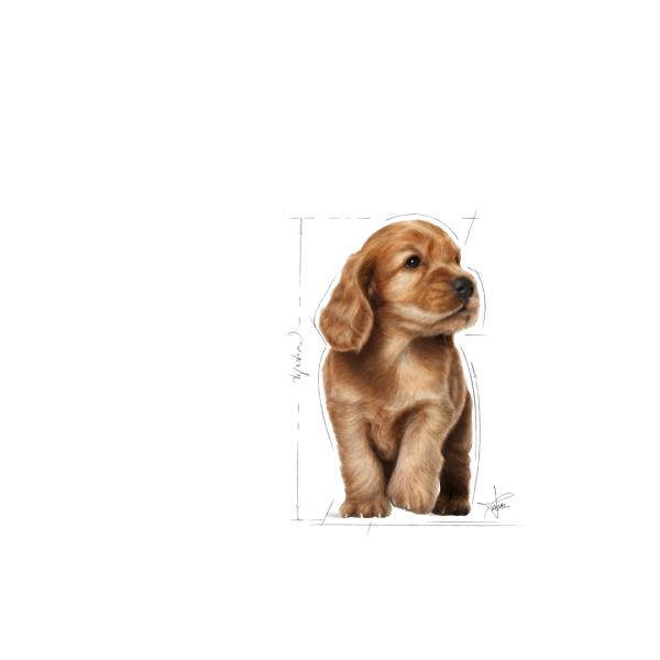 Royal Canin COCKER Puppy Hrana Uscata Caine