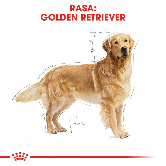 Royal Canin Golden Retriever Adult hrana uscata caine 1