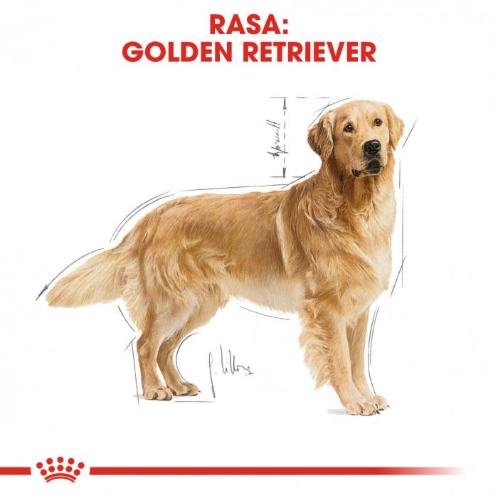 Royal Canin GOLDEN RETRIEVER Adult Hrana Uscata Caine 1