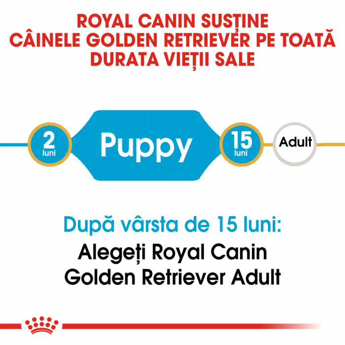 Royal Canin GOLDEN RETRIEVER Puppy Hrana Uscata Caine 1