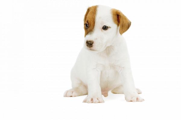 Royal Canin JUNIOR Hrana Umeda Caine