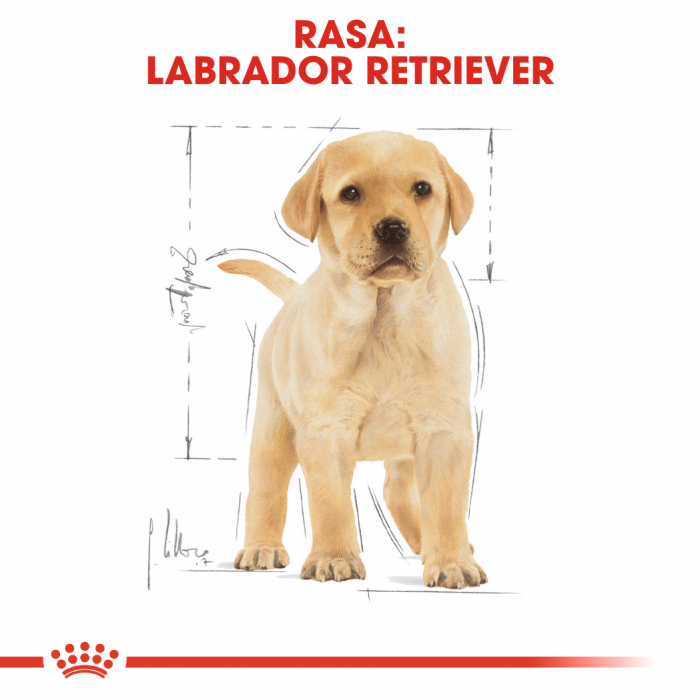 Royal Canin Labrador Puppy hrana uscata caine junior, 3 kg [4]