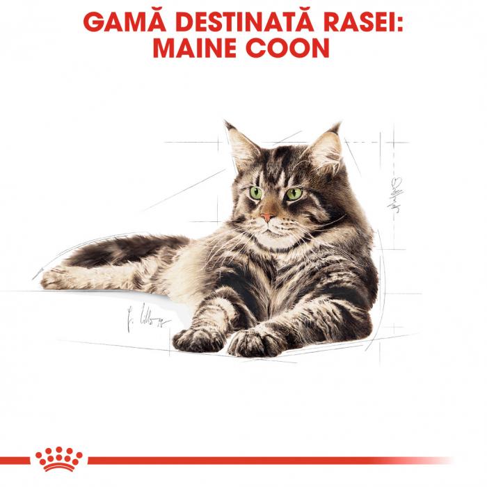 Royal Canin MAINE COON Adult Hrana Uscata Pisica 2
