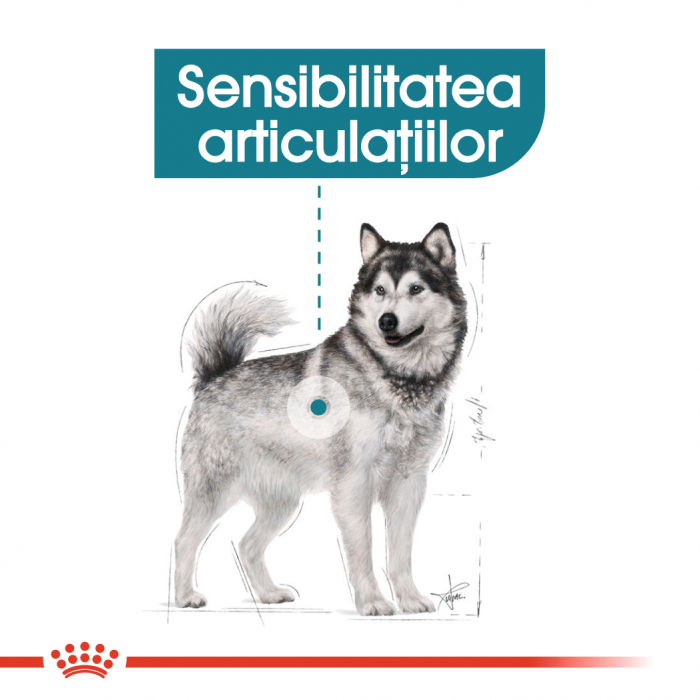 Royal Canin MAXI JOINTCARE Hrana Uscata Caine 2