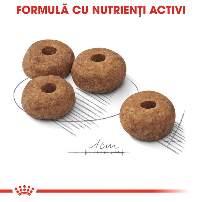 Royal Canin Medium sterilised Hrana Uscata Caine 4