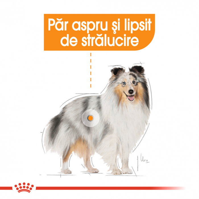 Royal Canin MINI COAT CARE Hrana Uscata Caine 1