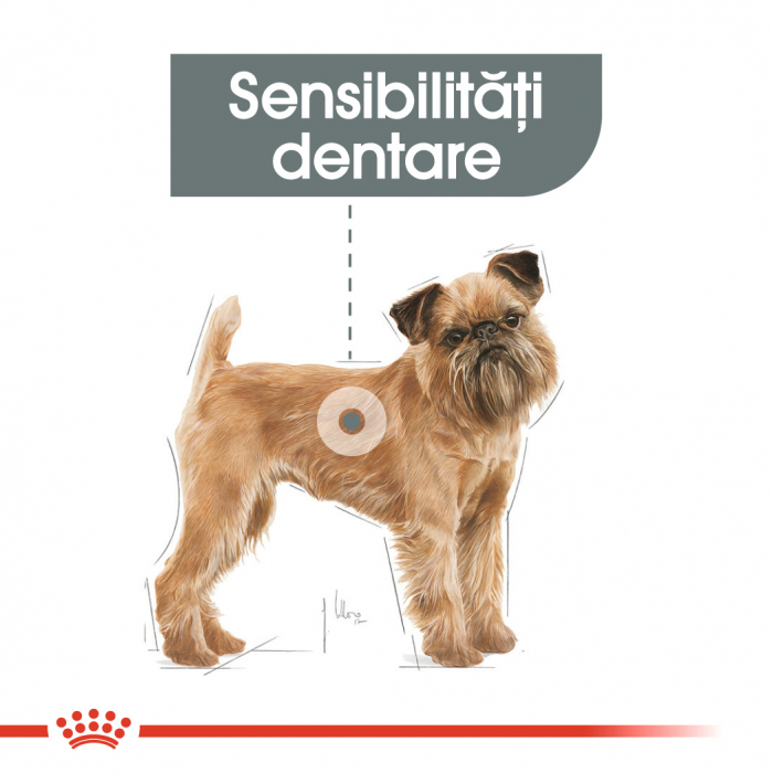 Royal Canin Mini Dental Care Hrana Uscata Caine 1