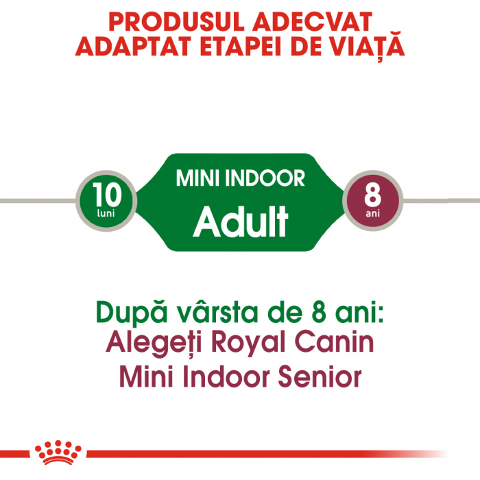 Royal Canin Mini Indoor Adult Hrana Uscata Caine 1