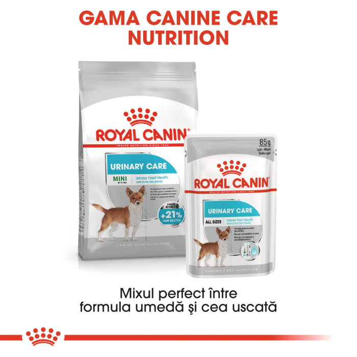 Royal Canin MINI URINARY CARE Hrana Uscata Caine 4