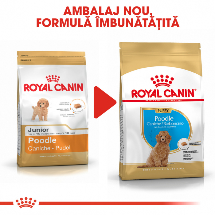 Royal Canin POODLE Puppy Hrana Uscata Caine 3