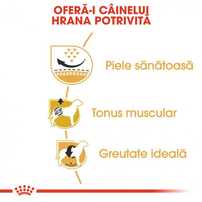 Royal Canin PUG Adult Hrana Uscata Caine 3