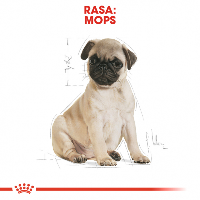Royal Canin Pug Puppy hrana uscata caine junior, 1.5 kg 4