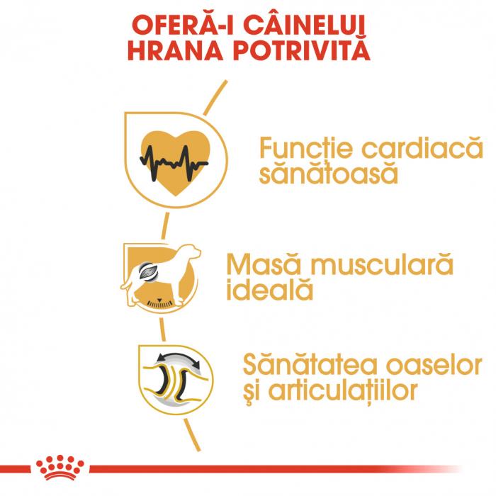 Royal Canin ROTTWEILER Adult Hrana Uscata Caine 3