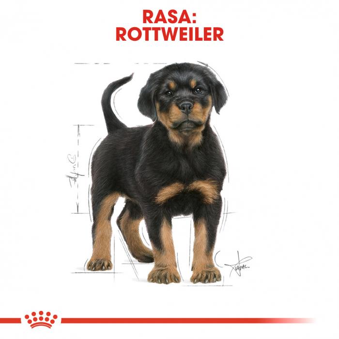 Royal Canin ROTTWEILER Puppy Hrana Uscata Caine 4