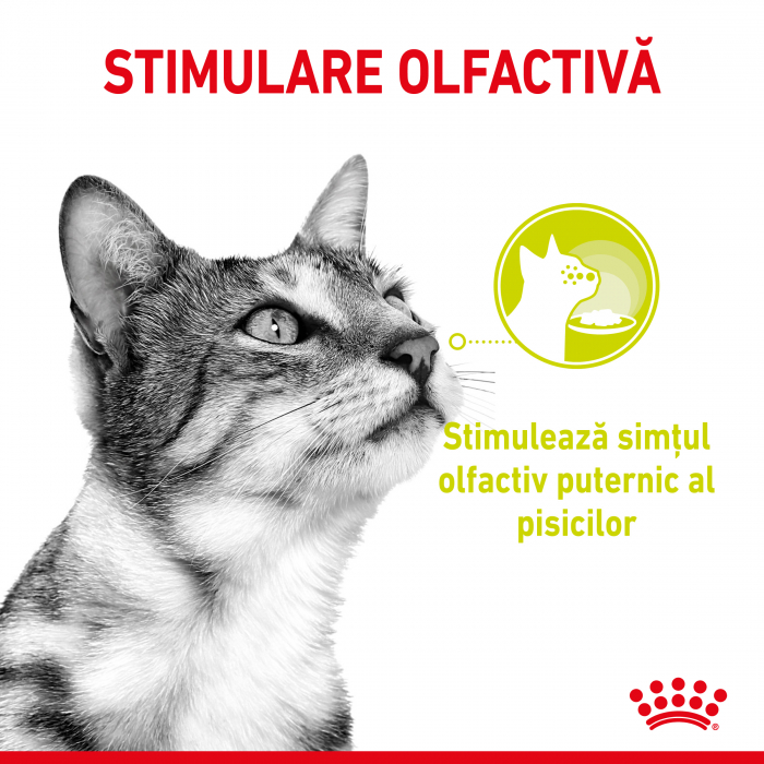 Royal Canin Sensory Smell, hrana umeda pisici, stimularea mirosului (in sos), 12 x 85 g [1]