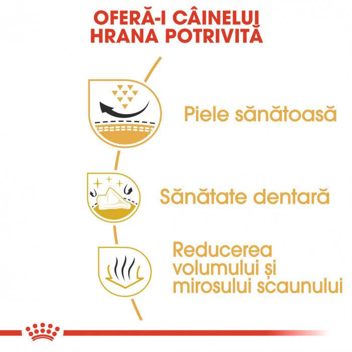 Royal Canin SHIH TZU Adult Hrana Uscata Caine 3