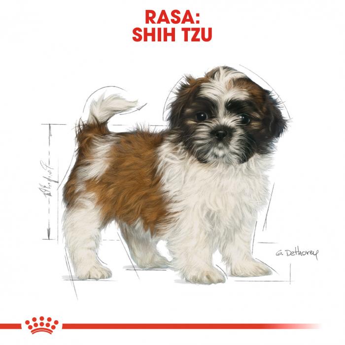 Royal Canin SHIH TZU Puppy Hrana Uscata Caine 4