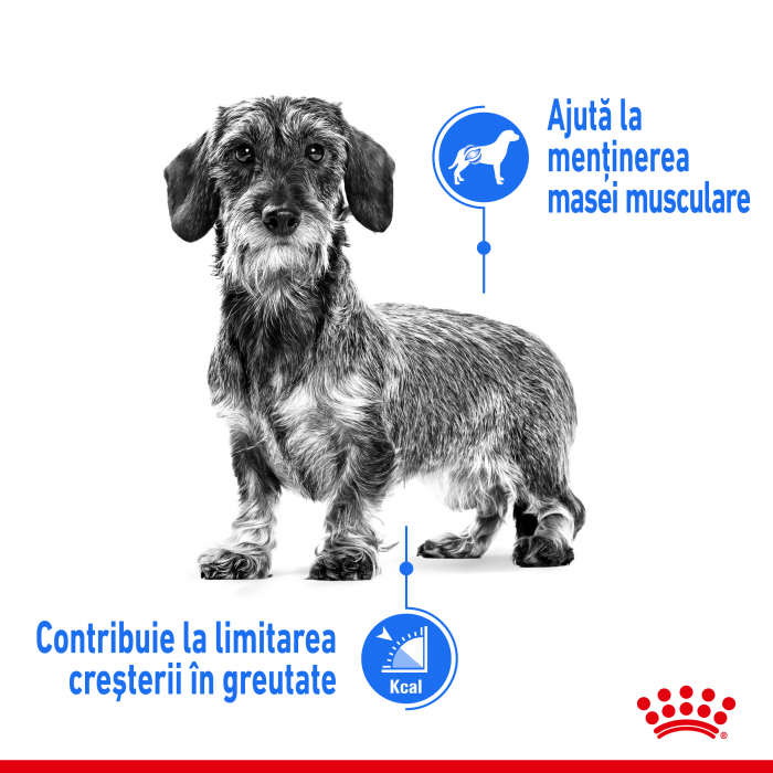 Royal Canin XSmall Light Weight Care Adult hrana uscata caine, limitarea cresterii in greutate, 3 kg [1]