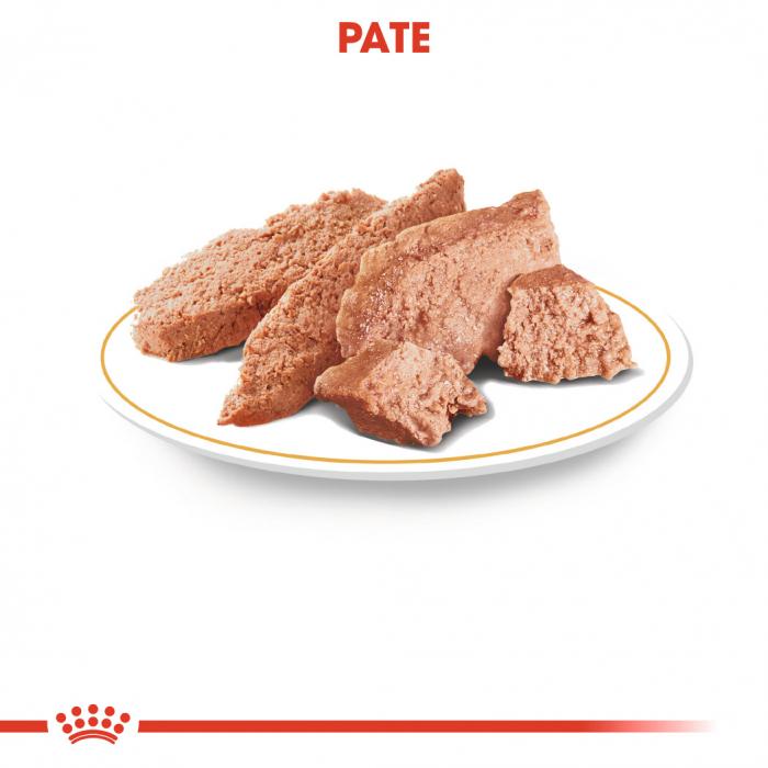 Royal Canin YORKSHIRE TERRIER Hrana Umeda Caine 1