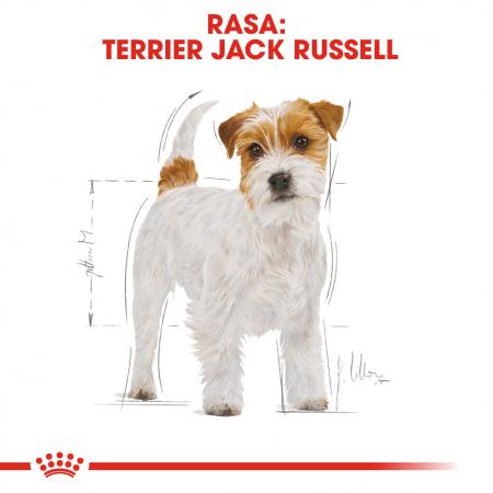 Royal Canin Jack Russell Terrier Adult, hrana uscata caini, 1.5 kg [1]