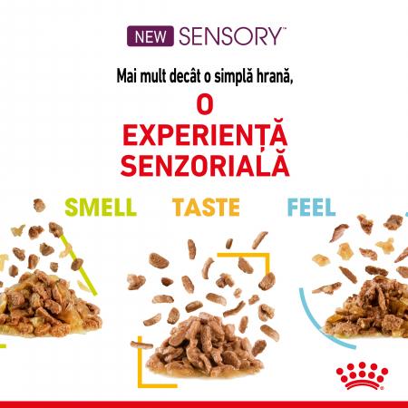 Royal Canin Sensory Feel, hrana umeda pisici, stimularea simtului tactil (in sos), 12 x 85 g [2]