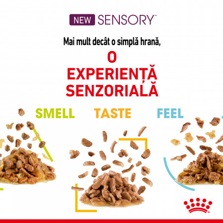 Royal Canin Sensory, hrana umeda pisici, stimularea simturilor (in sos), 12 x 85 g [4]