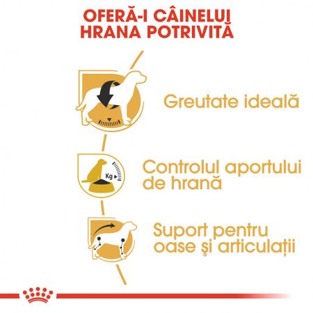Royal Canin BEAGLE Adult Hrana Uscata Caine2