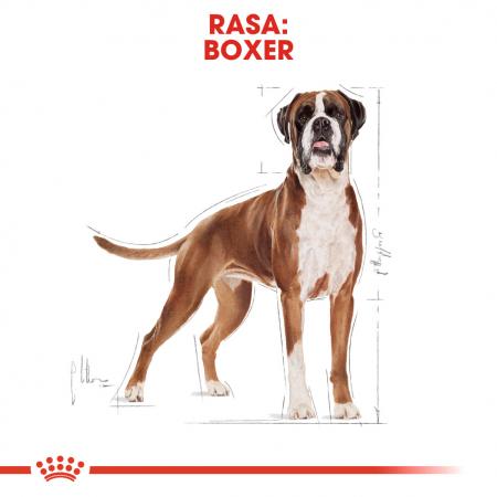 Royal Canin BOXER Adult Hrana Uscata Caine1