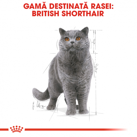 Royal Canin BRITISH SHORTHAIR ADULT Hrana Umeda Pisica2