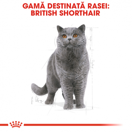 Royal Canin BRITISH SHORTHAIR Adult Hrana Uscata Pisica1